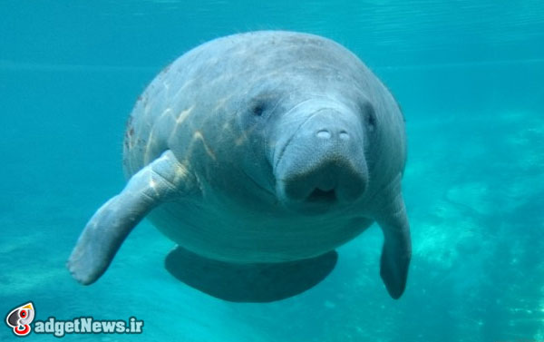 xperia z1s goes on an underwater manatee shoot