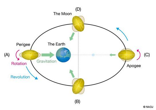 نمودار چرخشی میدان گرانش ماه و زمین