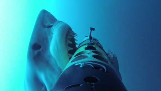 shark-attacks-robots-woods-hole