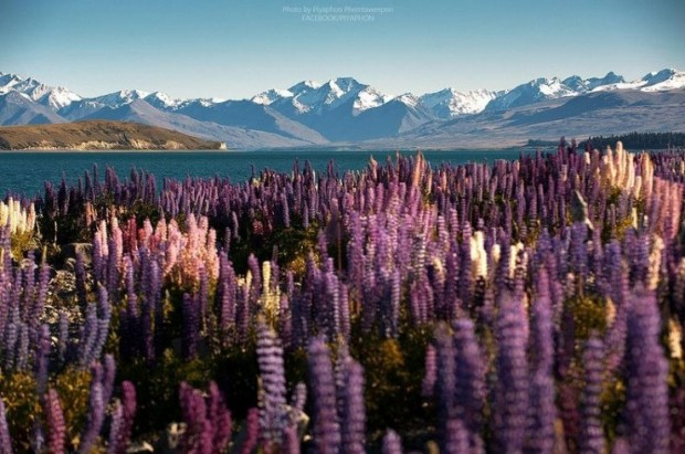 Lake Tekapo, Mackenzie Basin, New Zealand