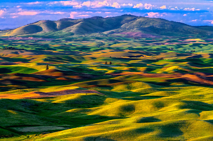 Palouse Region, Washington, USA