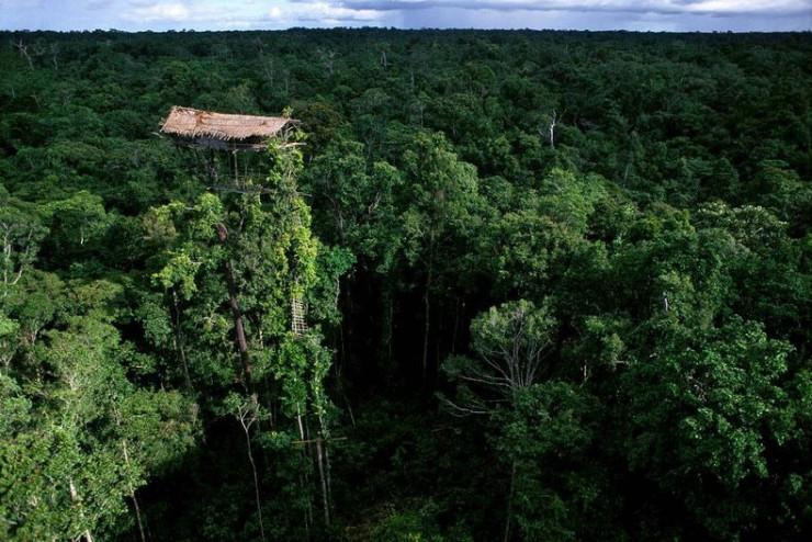 Korowai Tribe's Tree House, New Guinea