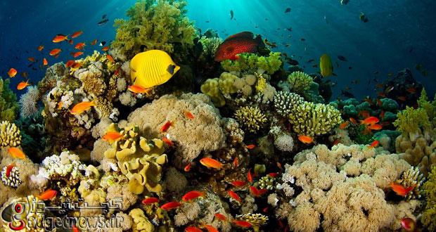 oceans-coral
