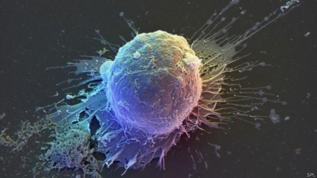 سلولهای بنیادی قابلیت تبدیل به هر سلول را دارند اما اینکه در معرض چه پیامهایی بیوشیمیایی قرار بگیرند سرنوشت آنها را تعیین میکند