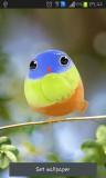 ۱_cute_bird.jpg