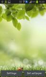 ۱_green_spring.jpg