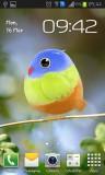 ۲_cute_bird.jpg