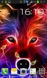 ۲_wolf.jpg