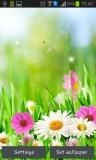 ۴_green_spring.jpg