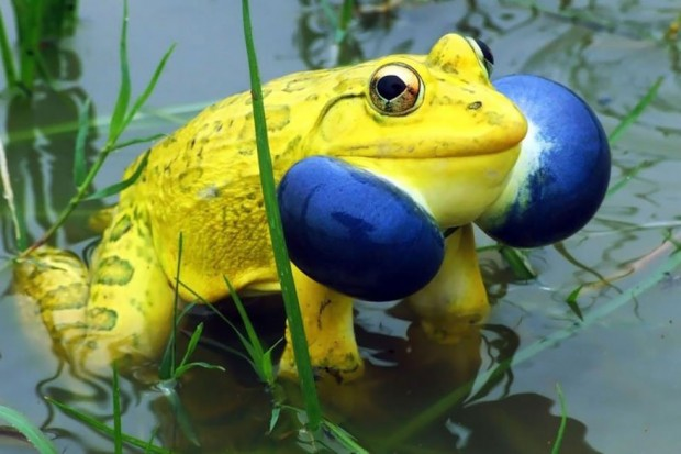 frog-photography-11__880