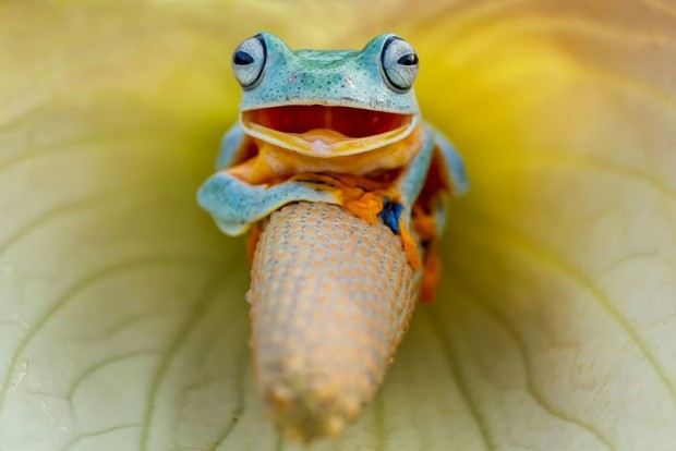 frog-photography-18__880