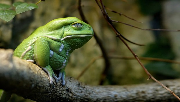 frog-photography-26__880