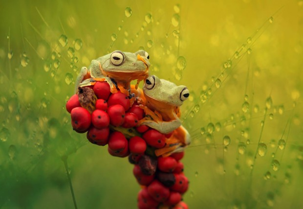 frog-photography-3__880