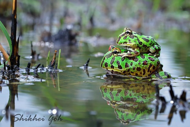 frog-photography-4__880