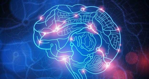 این یک تخیل نیست : دانشمندان موفق به اتصال چند مغز به یکدیگر و ساخت یک ابر مغز قدرتمند شدند !