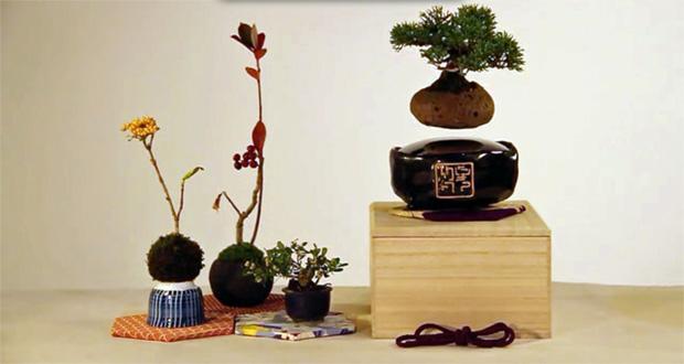 تماشا کنید: با این درختان بونسای شناور در هوا خانهی خود را زیباتر کنید