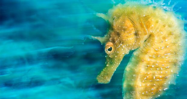 تصاویری از اعماق دریا که شما را شگفت زده خواهند کرد ۱۶ ۱