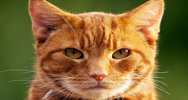 ۱۷ وظیفه بسیار مهم گربه ها !