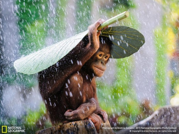 National-Geographic-Photo-Contest-2015-Winners-04