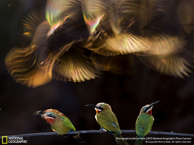 National-Geographic-Photo-Contest-2015-Winners-07