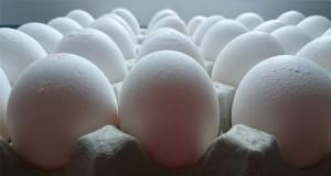 پوست-تخم-مرغ-گجتنیوز-بیوپلاستیک