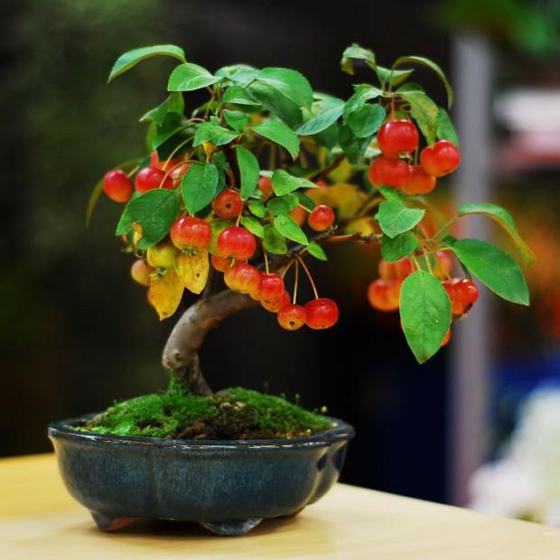 15 عکس زیبا از درختان بونسای