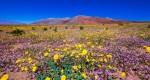 شکوه Death Valley ؛ درهی مرگ را تابحال به این زیبایی ندیده بودید