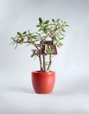 خانههای درختی در ابعاد مینیاتوری که محل مناسبی برای زندگی پریها هستند!