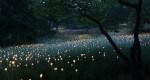 هنرمندی که با ۵۰ هزار چراغ، صحرا را به سرزمین رویاها تبدیل کرده است