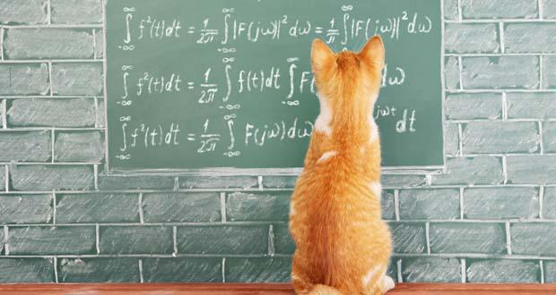 گربه ها فیزیکدانانی باهوش