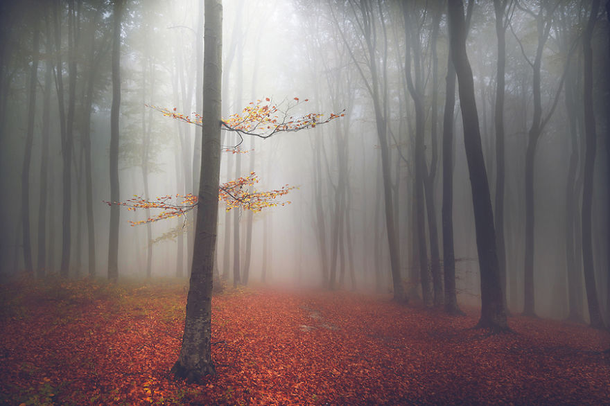داستانهایی از جنگل ؛مجموعه تصاویری که شما را به عمق رویاییترین جنگلهای دنیا میبرد
