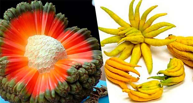 عجیب ترین میوه های جهان (بخش دوم)