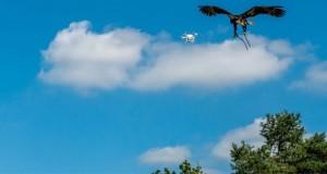عقابهای پلیس هلند آمادهی شکار پهپادهای متخلف هستند