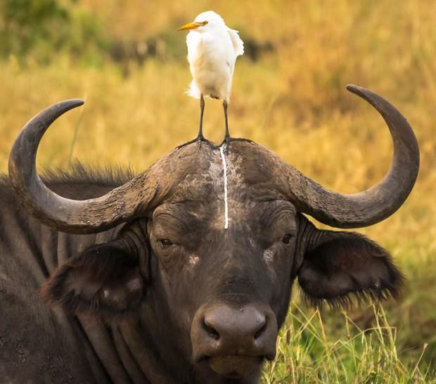 مسابقه عکاسی زندگی خنده دار حیوانات 2016