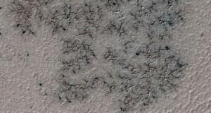 عنکبوت های مریخی