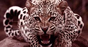 خطرناک ترین جانداران جهان را بشناسید
