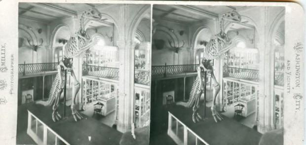 تصویر علمی نمایش اسکلت دایناسور ها درسوروس در سال