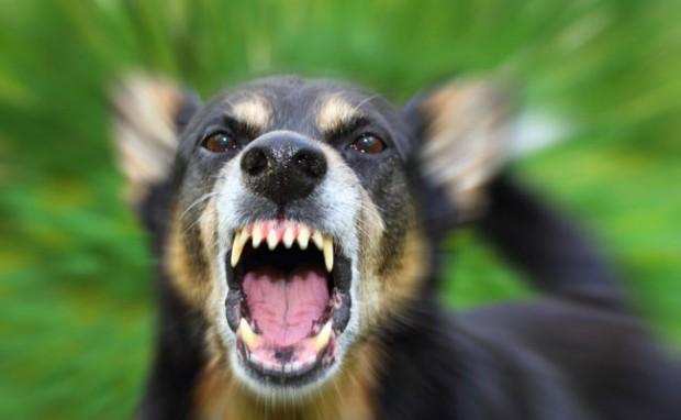 ترس از سگ (Cynophobia)    حتی کوچکترین و بامزهترین سگهای نژاد ژرمن شپرد میتوانند ترسی مهیب را در مبتلایان به این نوع از فوبیا ایجاد کنند. این ترس معمولا از احتمال گاز گرفته شدن خود فرد و یا افرادی دیگر توسط سگها ناشی میشود البته برخی تنها نسبت به سگهای شکاری و یا تازی هراسناک هستند.