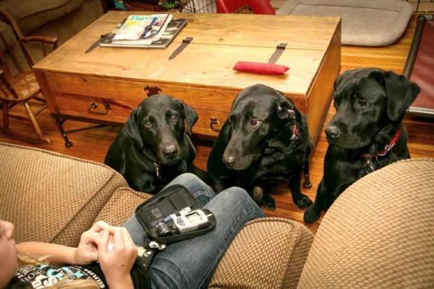 سگهایی که دیابت را تشخیص میدهند