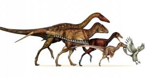 سیر تکامل دایناسورها به پرندگان