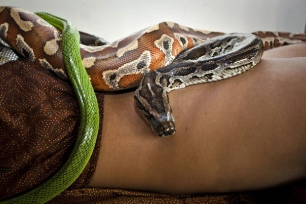 snake_massage3_fa_rszd