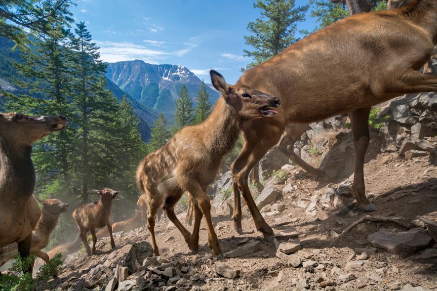 بهترین عکس های حیوانات در سال 2016 به انتخاب نشنال جئوگرافیک
