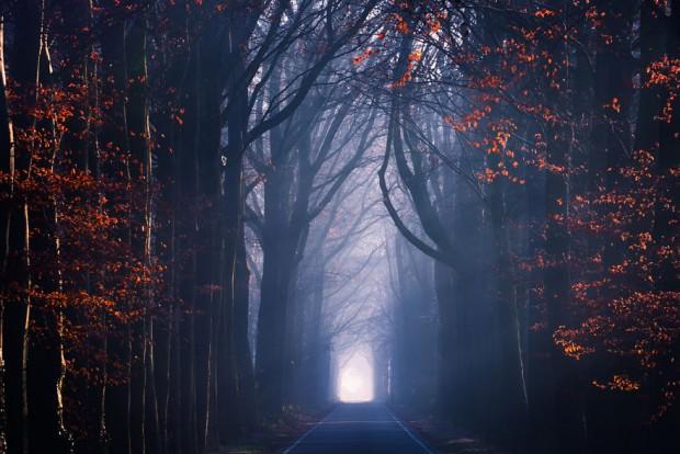 جنگل های هلند