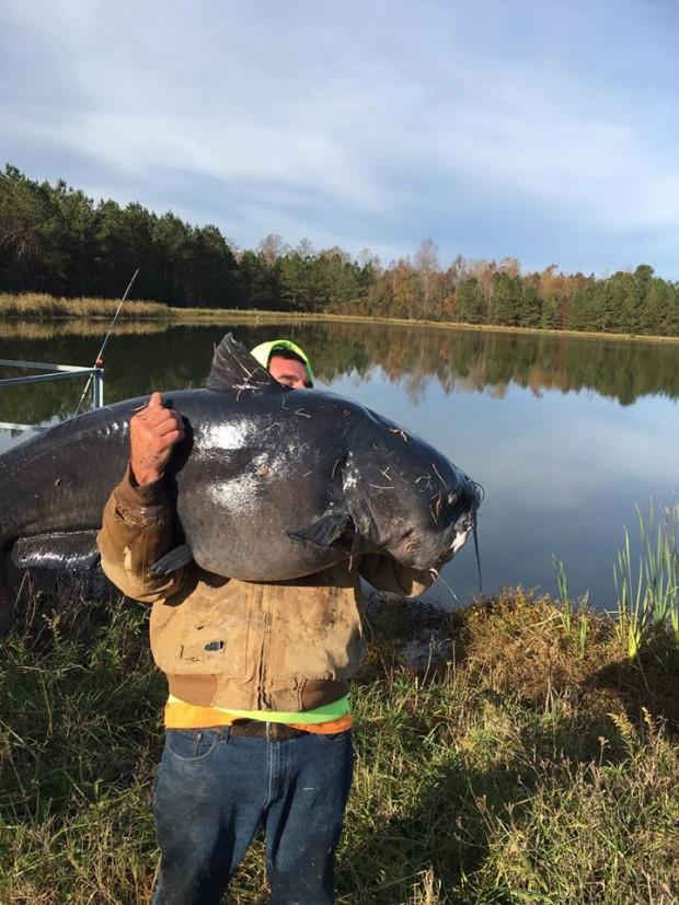 گربه ماهی غول پیکر شکار شده در کارولینای جنوبی