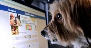 گزارش اخبار جعلی فیس بوک