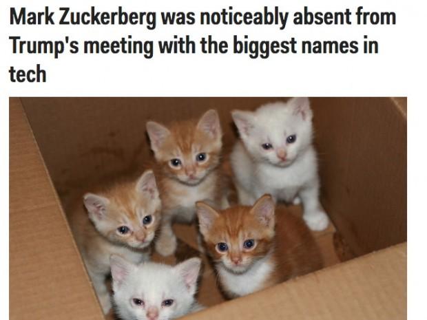 تبدیل تصاویر ترامپ به بچه گربه