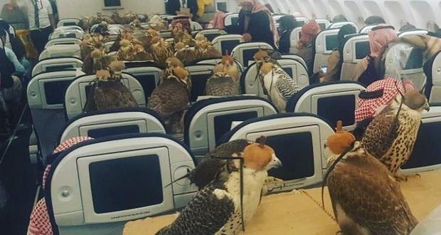 80 شاهین شاهزاده سعودی