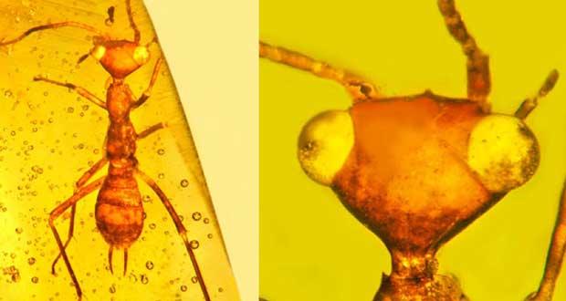 کشف فسیل حشره فرازمینی در کهربا