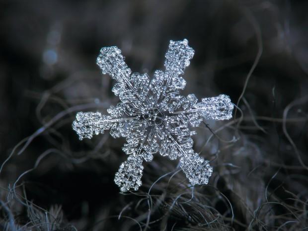 29 عکس نمای نزدیک و شگفتانگیز از دانه های برف