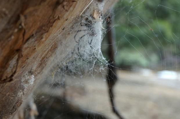 تار عنکبوت مصنوعی